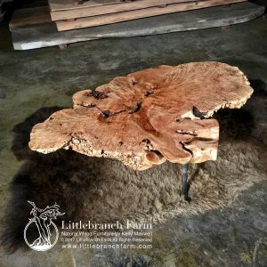 Bigleaf Maple burl wood table on buffalo hide rug.