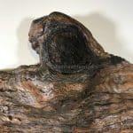 Knotty driftwood