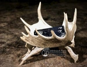 moose antler magazine rack